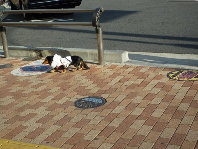 南茨木駅のまいごのイヌ