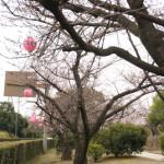 茨木市さくら通りのさくらまつり
