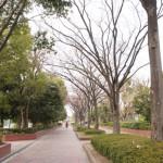 茨木市若園公園