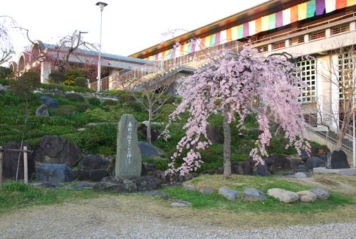 しだれ桜と弁天石碑