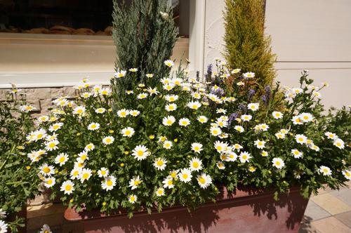 リトルストーン前の花