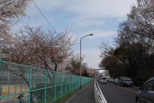 さくら通り茨木高校横