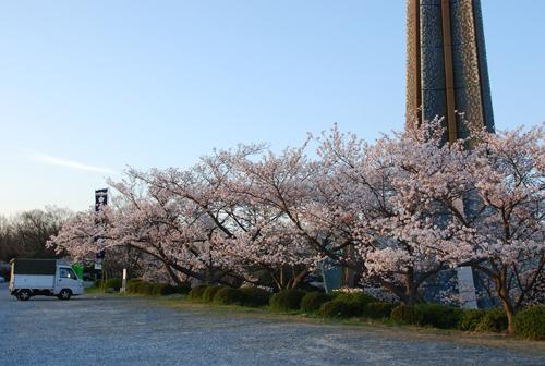 弁天の塔と桜