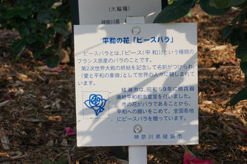 綾瀬市ピースの意味