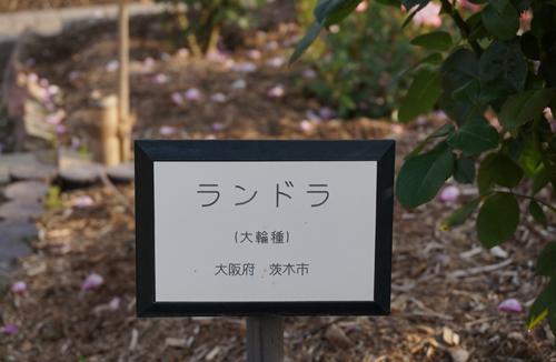 茨木のバラ・ランドラ看板