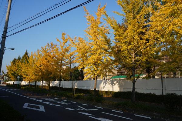 三島中学の横の道