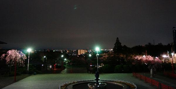 弁天夜桜本堂からDSC00407