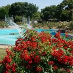 若園公園バラ公園噴水2015年
