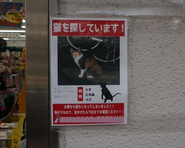 とおので迷い猫のチラシDSC03655のコピー