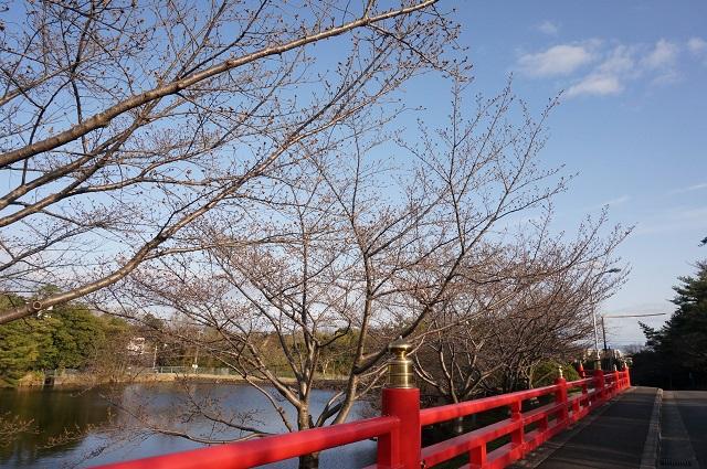 辯天さんの橋のところ