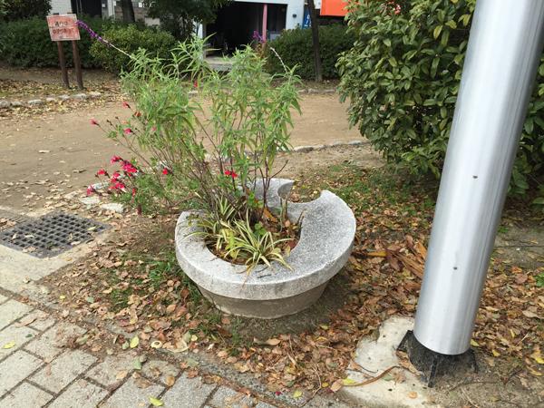 佐和良義神社のところの植木