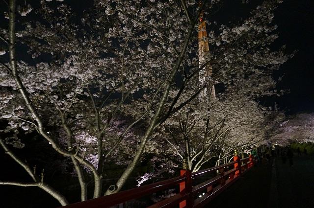 辯天さんの池のところの桜