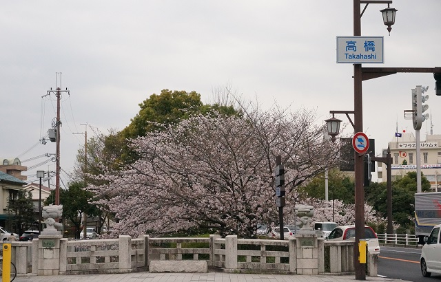 高橋の交差点から南方面の桜
