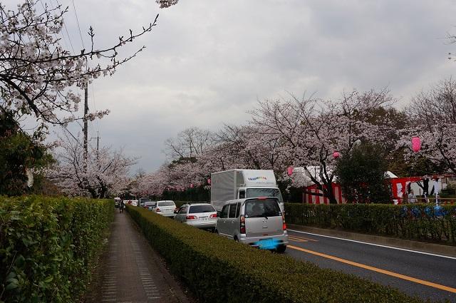 桜通りの渋滞