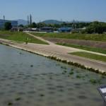 5月18日安威川の普通の水のところ