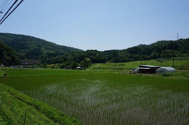 見山田園風景