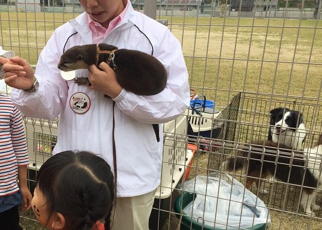 アジアウィークでふれあい動物園かわうそ