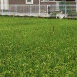 南茨木方面の田んぼで