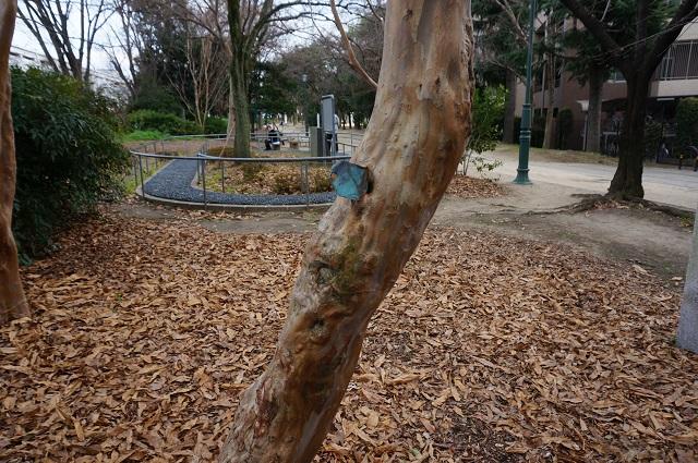 茨木市制施行35周年植樹の幹と健康歩道DSC04983