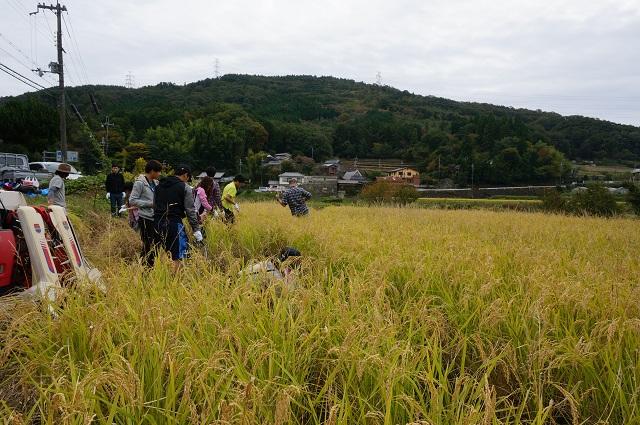5-2日本酒プロジェクト稲刈りスタートDSC01351