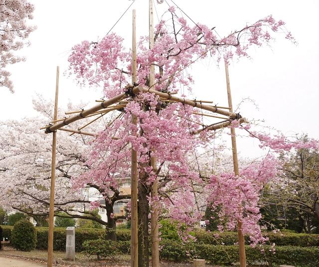 元茨木川緑地の大阪みどりの百選DSC05300