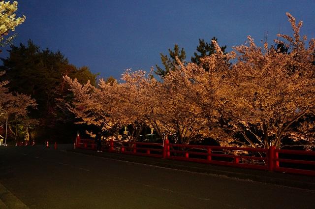 弁天夜桜池のほうDSC05359