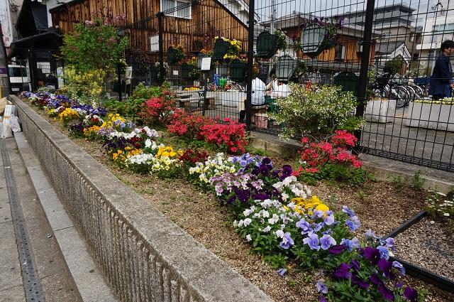 阪急茨木本町通商店街駐車場横の花DSC05572