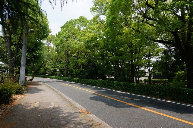 川端通り風景DSC06551