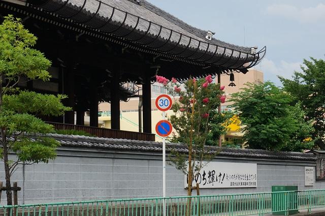 茨木別院前のさるすべりの木DSC07740