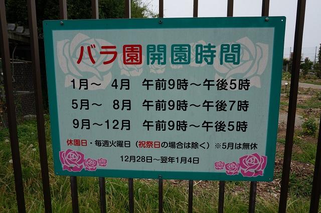 バラ園の開園時間DSC07075