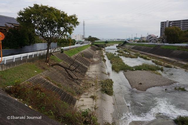 安威川2017年10月木が倒れてるDSC09205