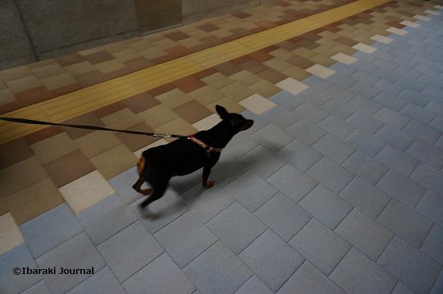 11アンダーパスで犬もDSC09888
