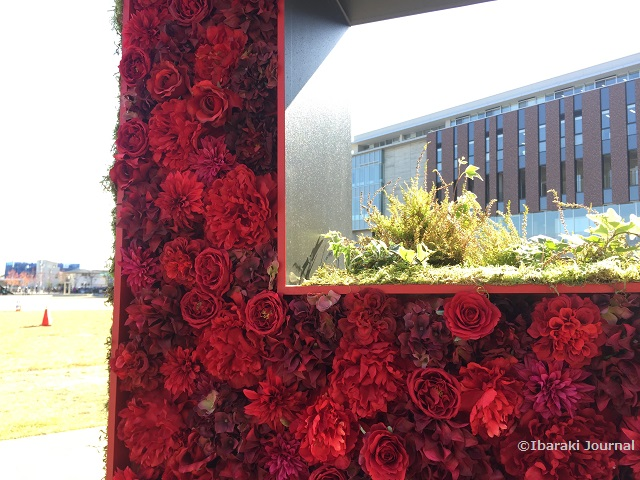 立命館大R文字の薔薇IMG_0025