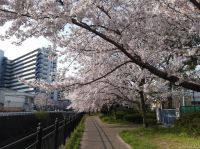 今日のいばらき(10/13)-緑いっぱい大正川沿いの道