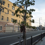 茨木市並木町にあった落し物