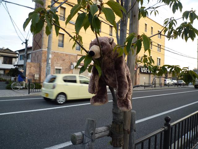 茨木市並木町の落し物のアップ