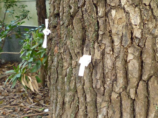 茨木神社の境内にある木の皮に結わえられたおみくじ