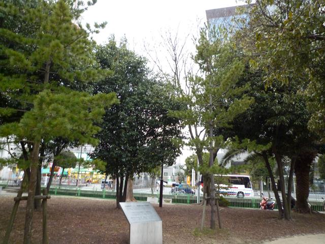 kkミネアポリス記念樹2