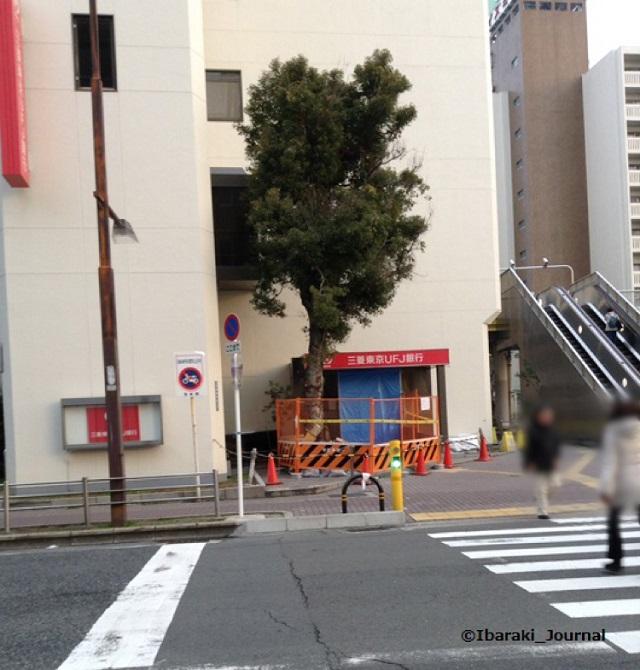 三菱UFJ銀行前の木2014年1月14日IMG_1569