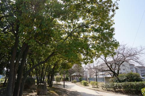 桜通りの木々