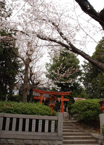 いぼ水神社の桜3