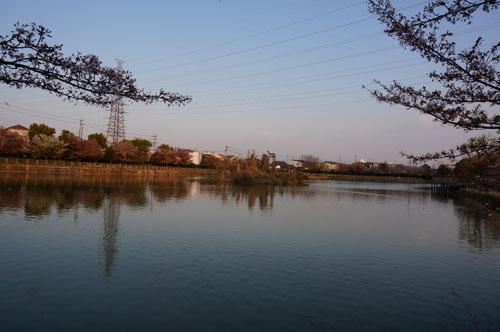 耳原公園池の全景