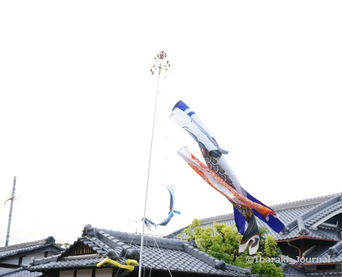 kk鯉のぼり大正川方面