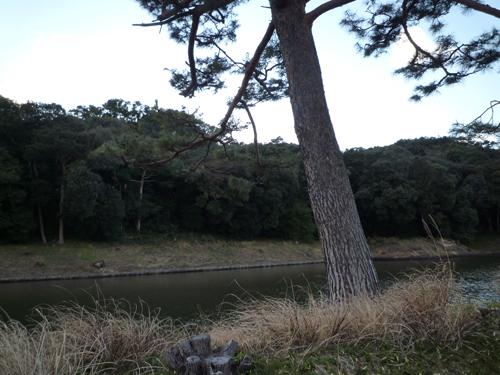 茨木茶臼山古墳らしい森