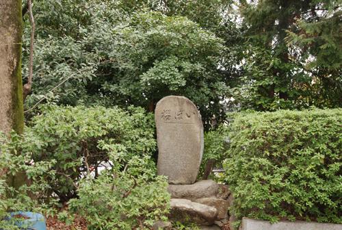 いぼ桜の石碑