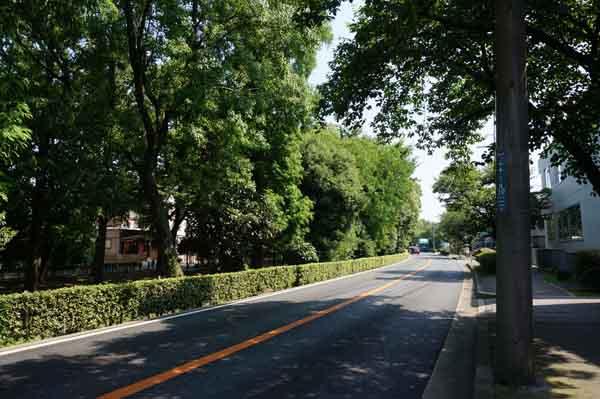 川端通り2014夏