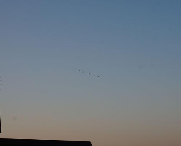 茨木東から西へ鳥DSC06944
