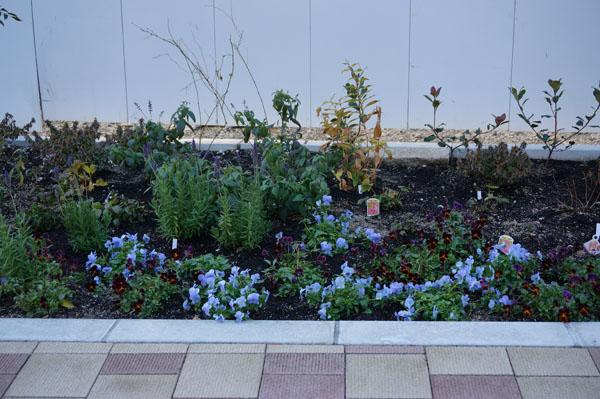 立命館ガーデンの花1DSC08121