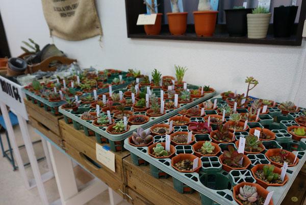 RojiPlants店内の植物
