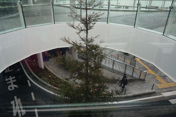 JR茨木東口中央の木を上からDSC00084
